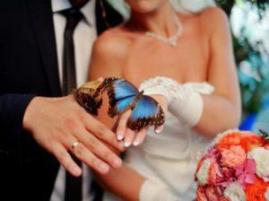 роскошный салют из живых бабочек