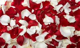 умопомрачительные лепестки роз