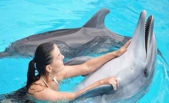 интересное купание с дельфинами